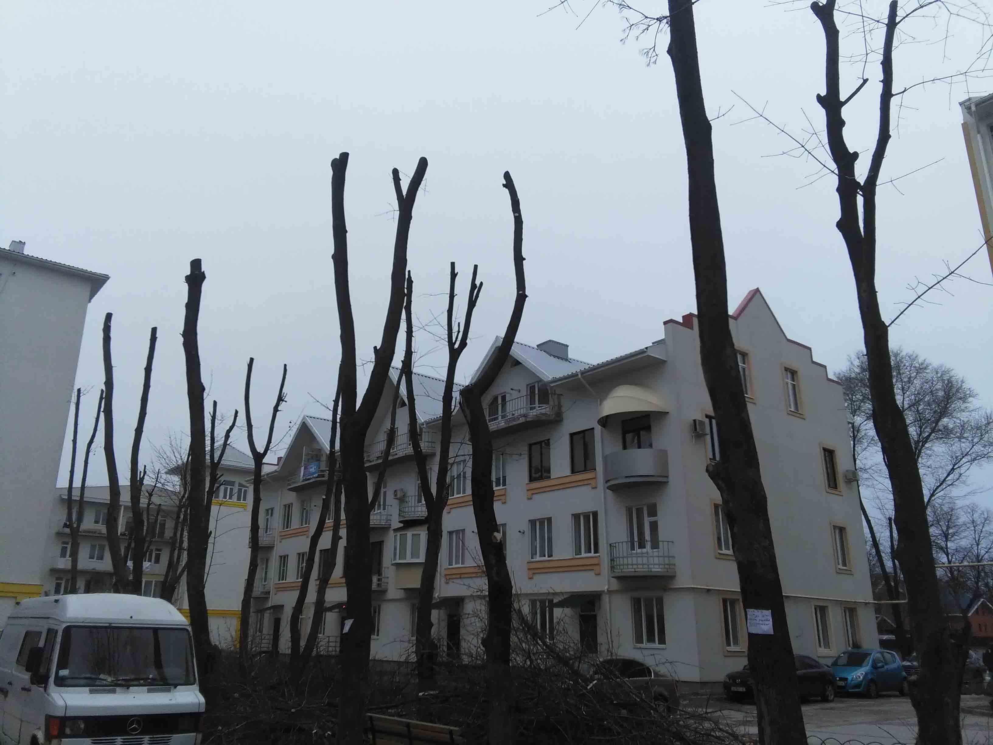 Санитарная и омолаживающая кронация деревьев